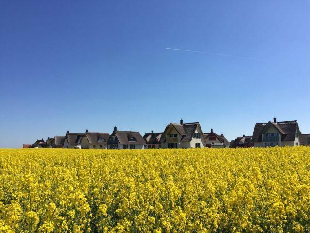 Die Siedlung im Rapsfeld