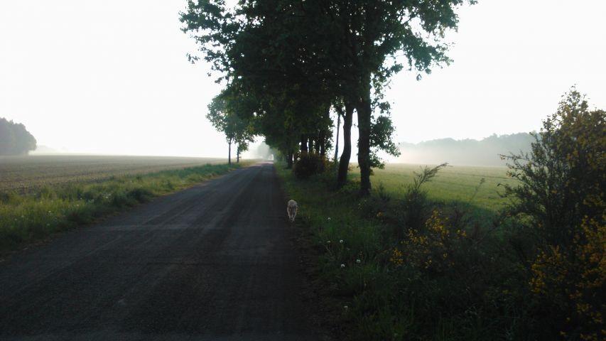 Wege durch Wald und Flur