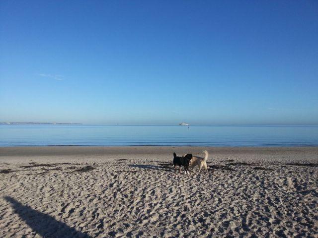 Hundestrand und in der Nebensaison der ganze Strand für Hunde