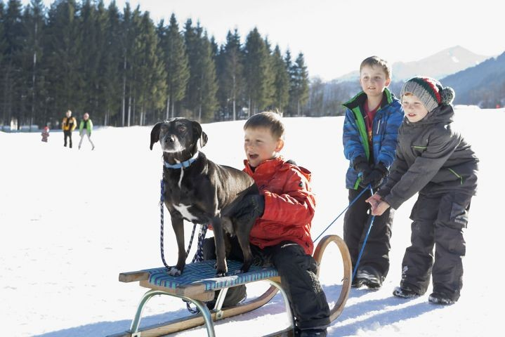Rodelspaß mit Hund