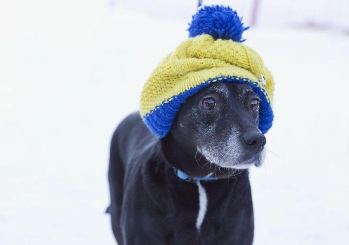 Hund mit Pudelmütze