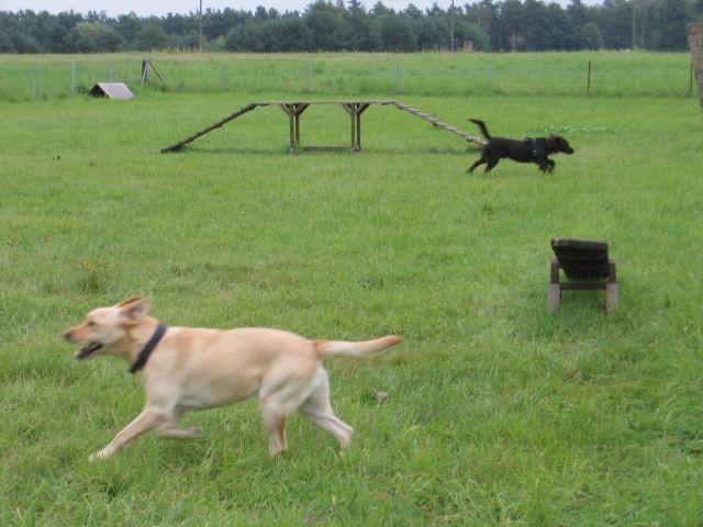 Der 1600m² große Hundeübungsplatz