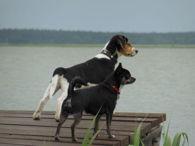 Wassergrundstück- Urlaub mit und ohne Hund