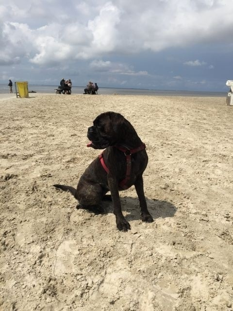 Hundestrand Norddeich
