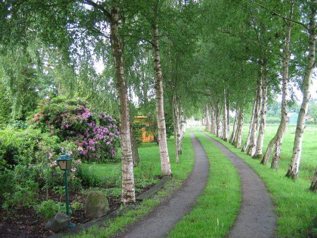 Zufahrt über die eigene Birkenallee
