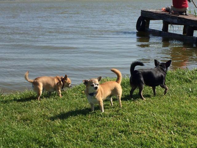 Unsere Piraten - Hundespielwiese