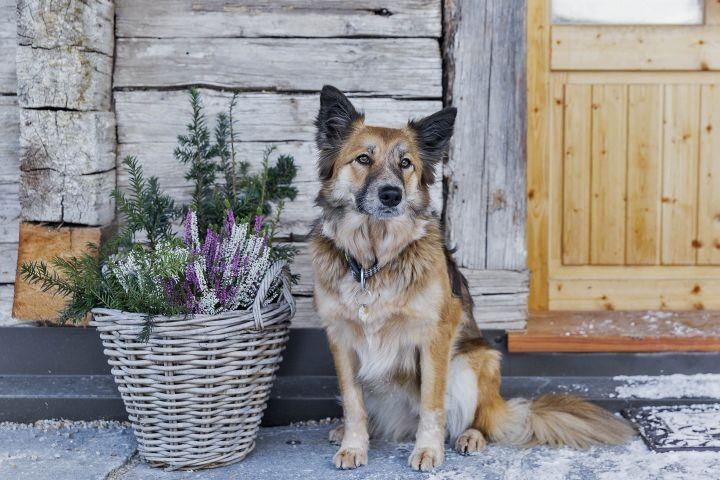 Hund vor dem Bauernhaus im Winter