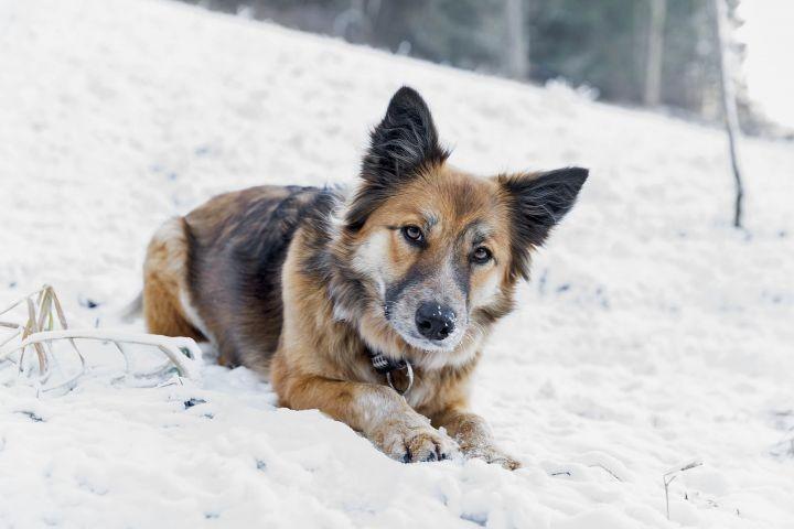 Hund im Garten des Bauernhaus im Winter