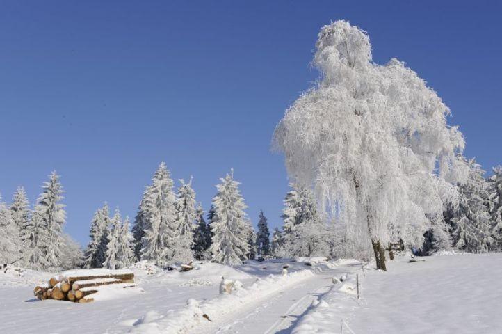 Langlaufen im Winter
