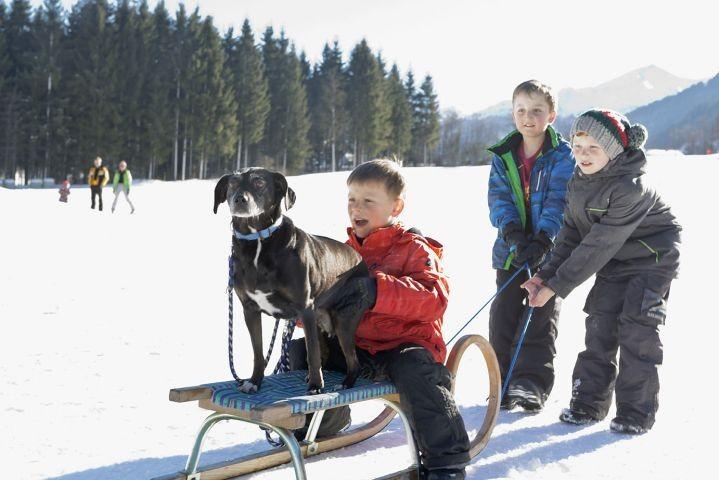 Hund Winter