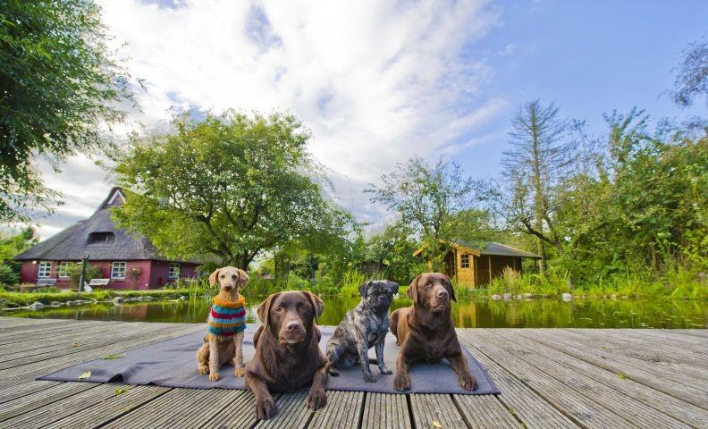 Glückliche Gasthunde am Teich