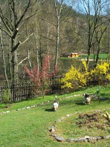 1 km ein Badesee,auch für Hunde