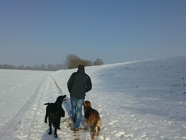 Spaziergang mit dem Hundetrainer