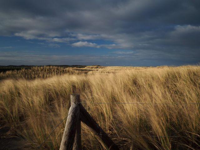 Dünenlandschaft Callantsoog