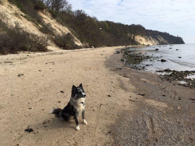 Urlaub mit Hunden auf Rügen im Ostseebad Baabe