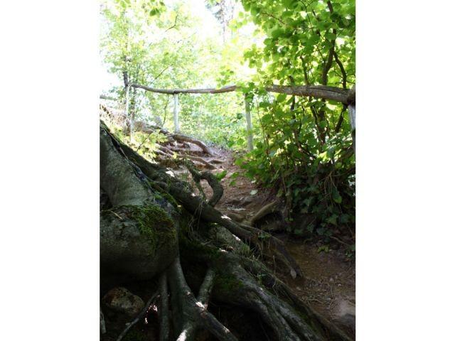 Der Weg zur Ruine Neukastel