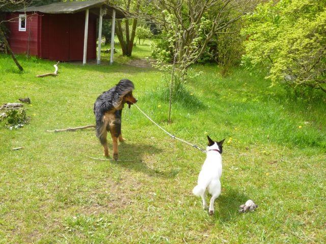 Sepp beim Dogsitting