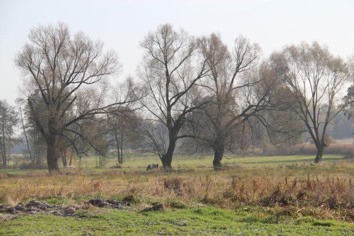 Blick von unserem Grundstück aus auf die Felder -im April