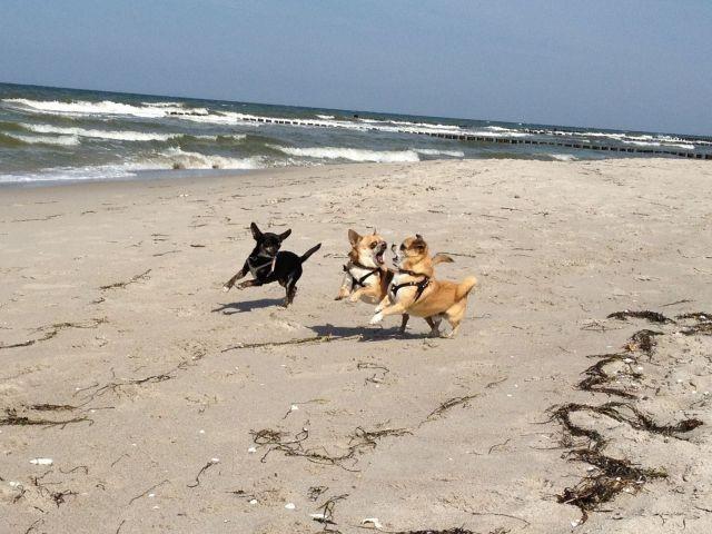 Ostsee-Hundestrand
