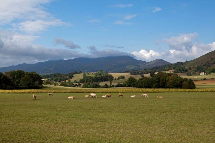 Weiden und Berge in der Umgebung