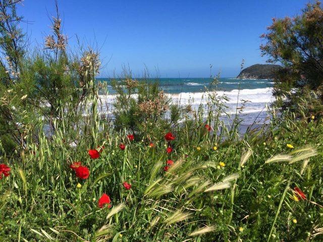 Meeresstrand   freie Strànde sauber und gepflegt