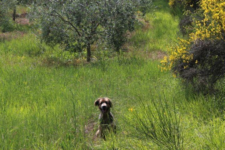 Unsere Umgebung - perfekt für Hunde