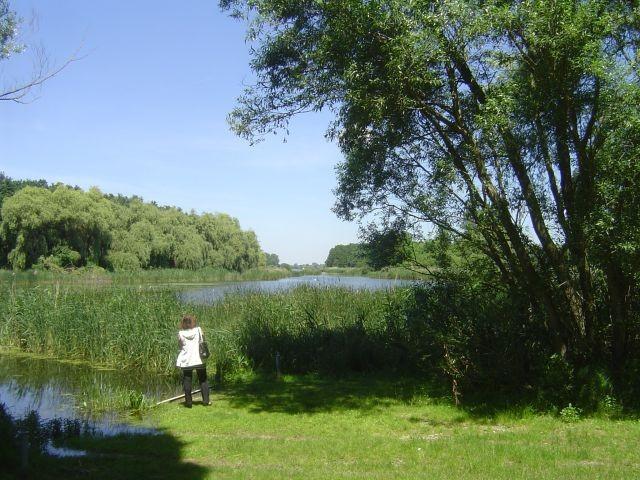 Naturschutzgebiet Kisbalaton ganz in der Nähe