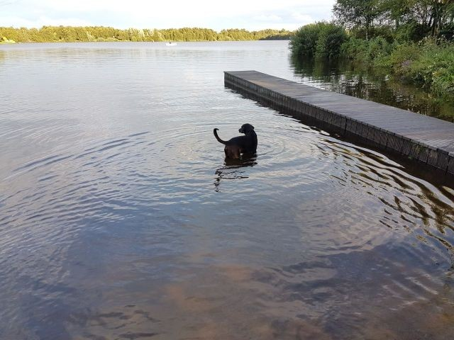 Hundestrand: auch für Nichtschwimmer prima geeignet