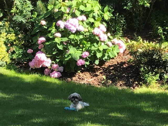 Pixi im Garten