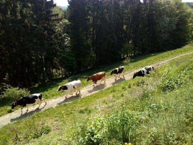 aktive landwirtschaft