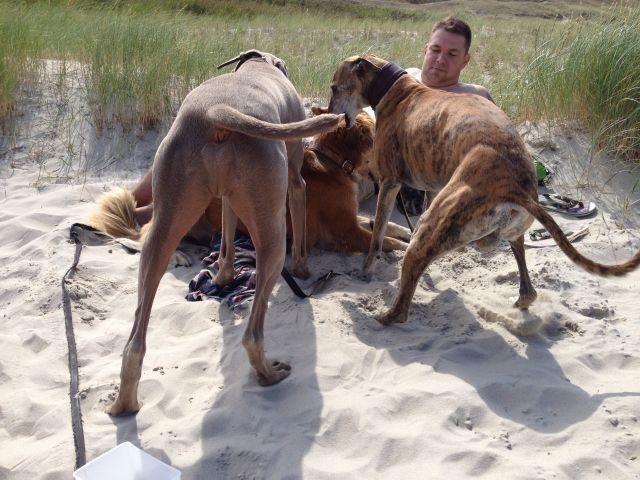 Mit Hunden am Strand sein - herrlich!