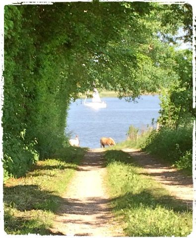 Weg zur Badestelle in Goltoft/Schlei