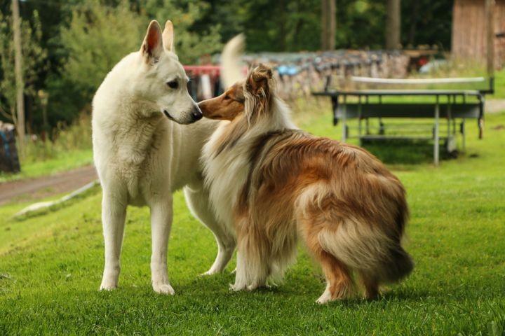 Luna-Luzie und Gästehund Sommer 2017