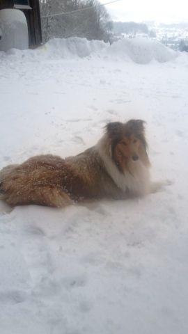 Februar 2017  Luna-Luzzie liebt Schnee