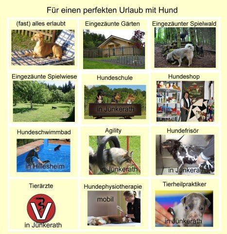 Angebot für Hunde