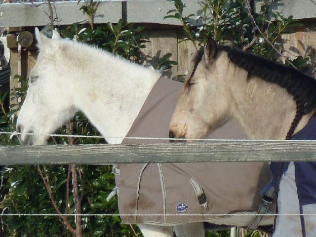 Pferde unserer Nachbarn