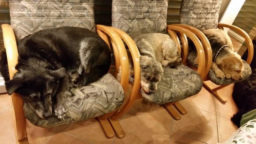 ein Teil unserer Hunde beim Nickerchen