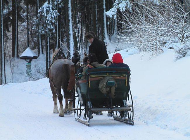 Fahrt mit dem Pferdeschlitten hinein in den Winterwald
