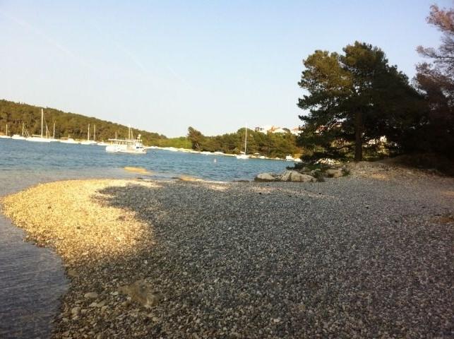 Ein Strand für Hunde und Familie