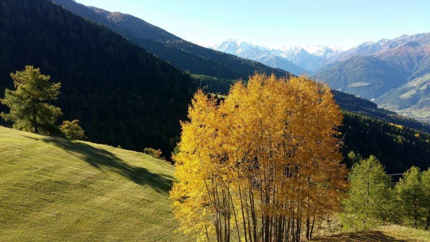 Aussicht vom Balkon im Herbst