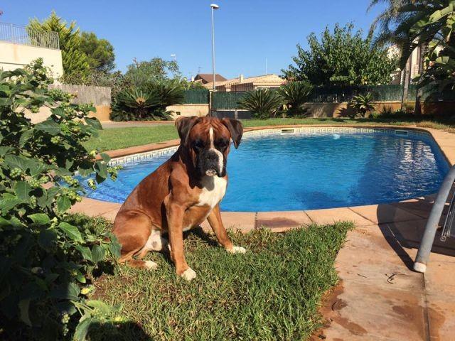Hund wohnen bei uns kostenlos