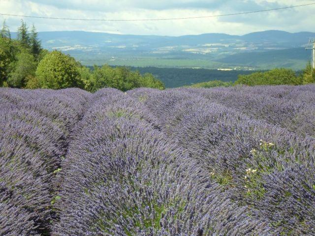 Lavendel rund um La Rostane