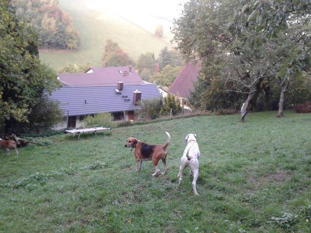 Die Wiese und der Wald auf unserem Grundstück ist 1,6 Meter hoch eingezäunt