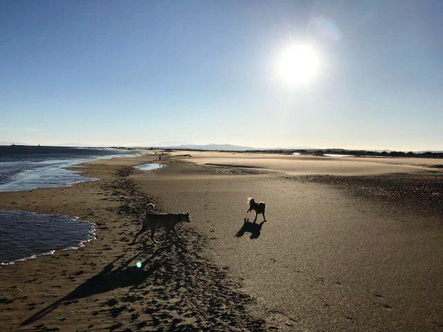 Hundestrand Narbonne-Plage