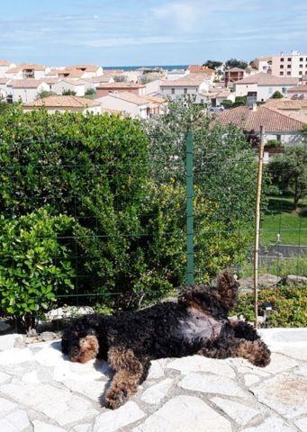 Gasthund auf Terrasse FeHaus Soleil