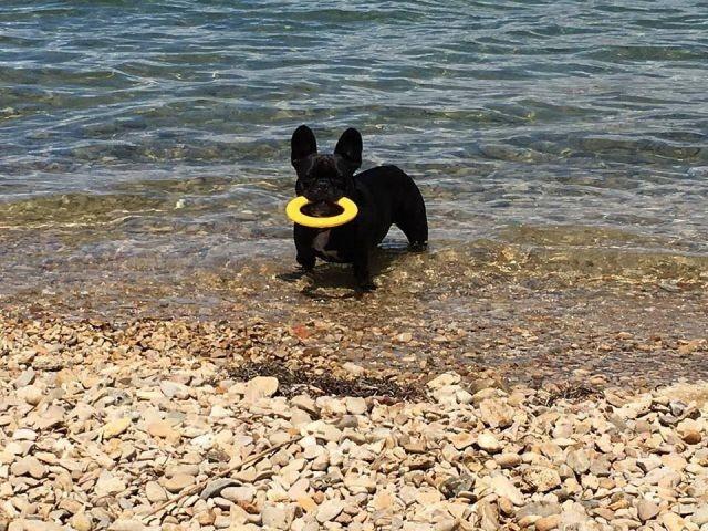 Urlaub mit Hund in Kroatien in der Villa Anita