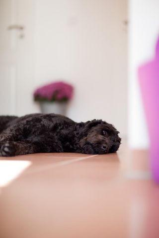 Bei uns fühlt sich dein Hund pudelwohl!