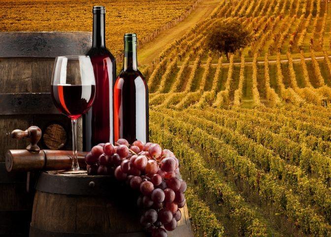 bei uns koennen Sie Wein und Oil kaufen  (unsere Produktion)
