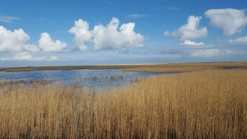 Naturschutzgebiet Schillig