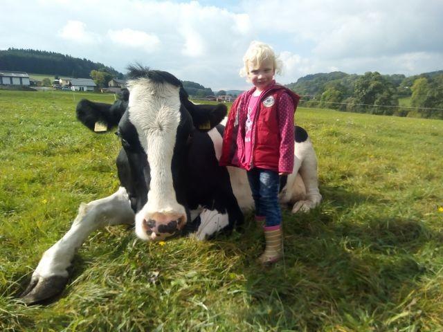 Kühe weiden bis an die Terrasse